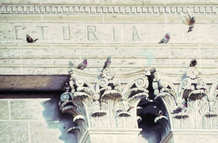 Pigeons of the Pillars