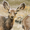 Winter Deer II